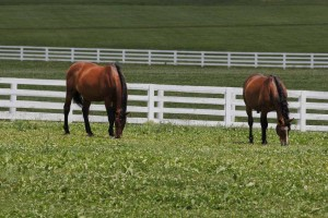 Fayette County's agricultural sales are dominated by the equine industry.